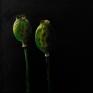 043. Grønne valmuer, 30 x 30 cm